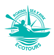 turquoise logo.png