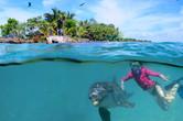 snorkel dolphin.jpg