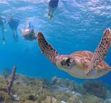 snorkel turtle.jpg