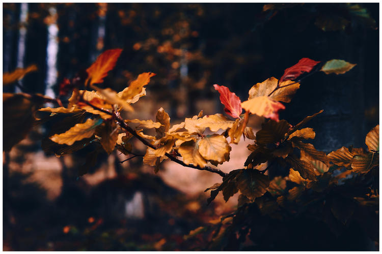 herbstlaub-fotografie-wolfenbuettel