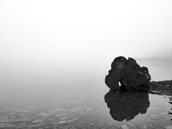 baumstamm-im-nebel-landschaftsfotografie-wolfenbuettel