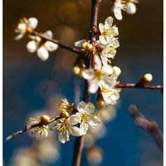 fotograf-wolfenbuettel-casual-fruehlingsblueten