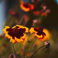 herbstblume-fotografie-wolfenbuettel
