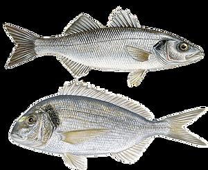 Marine aquaculture.png