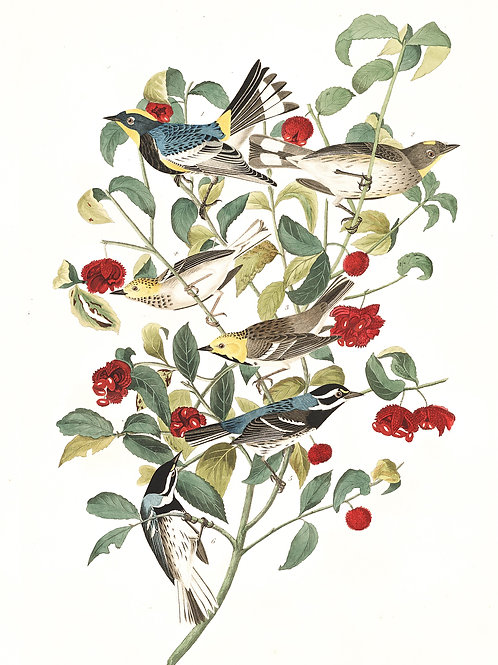 Audubon Warbler / Earth's crammed with heaven