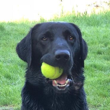 Hond9_bewerkt.jpg