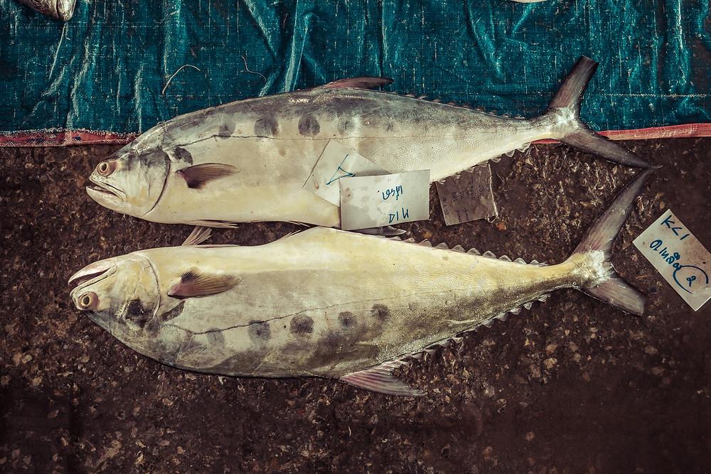 Fischmarkt in Ranong