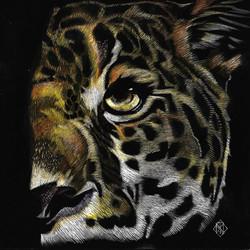 jaguar color eye
