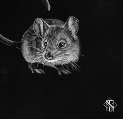 Mouse (SOLD)