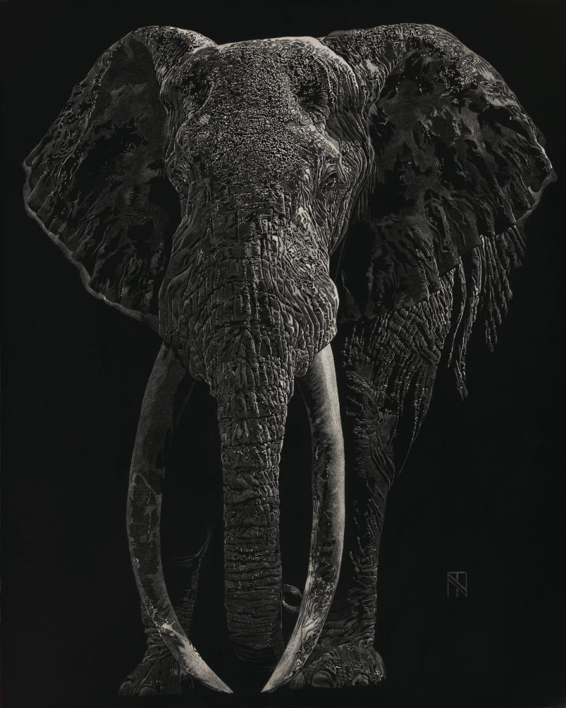 Elephant_Web