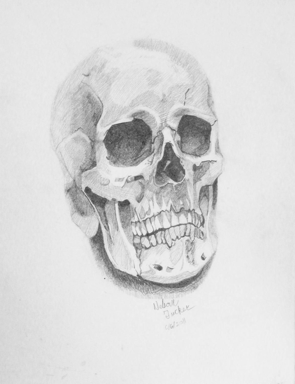Skull realistic