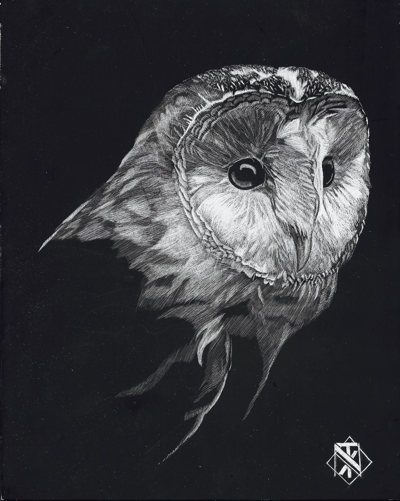 Barn Owl (SOLD)