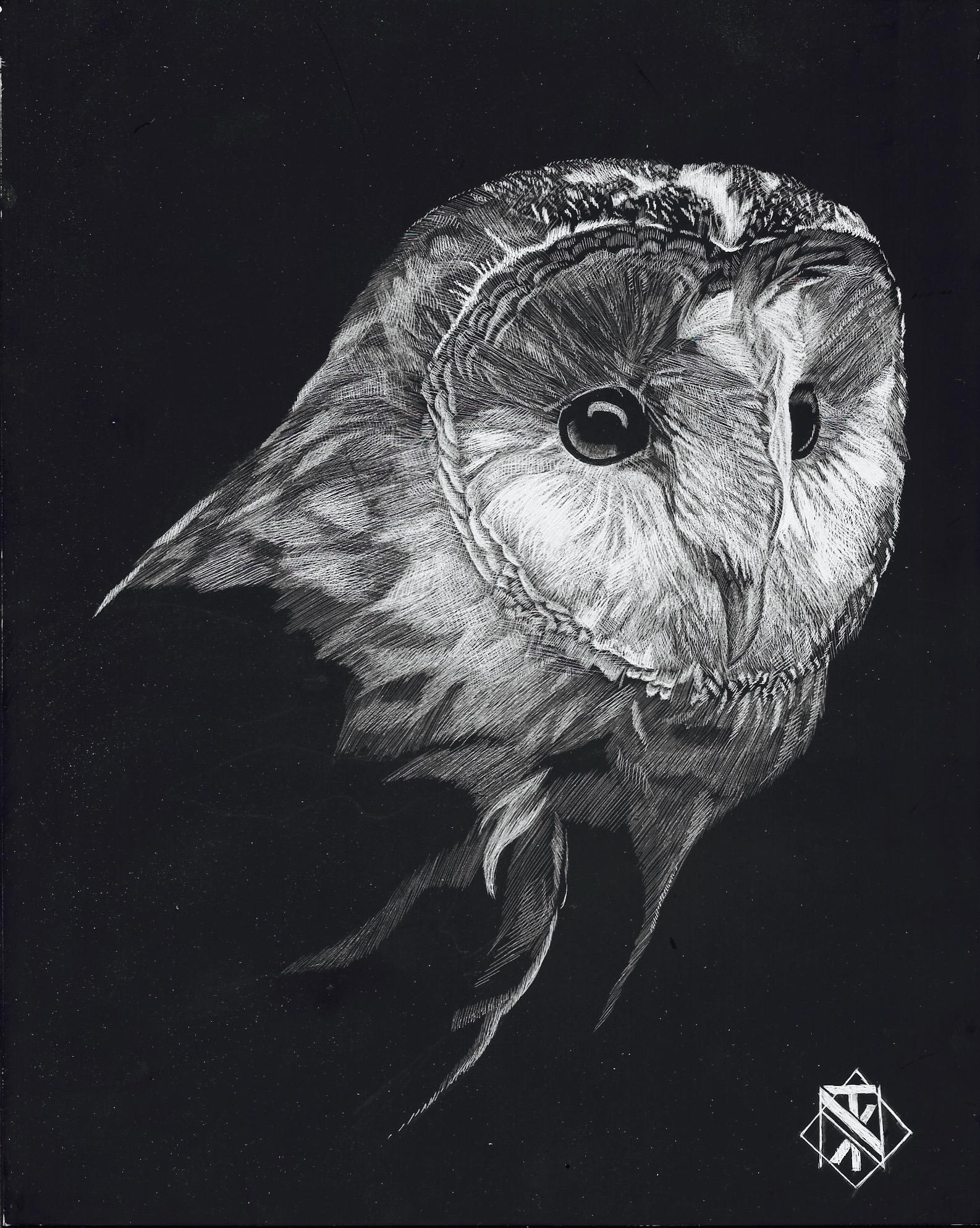 Barn Owl (SOLD)