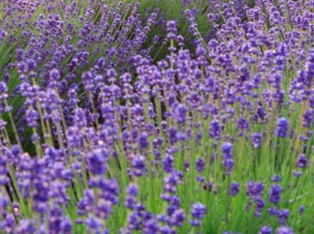 質のいい睡眠をとるために部屋の中に置くと良い植物5種類
