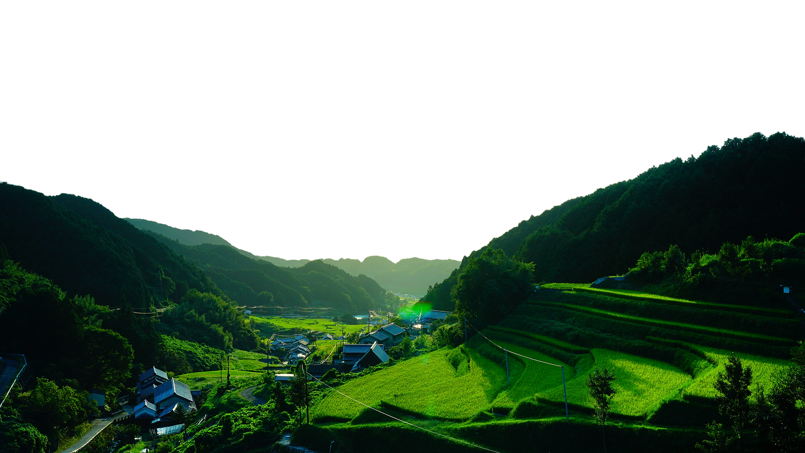 RiceFieldsPhoto.png