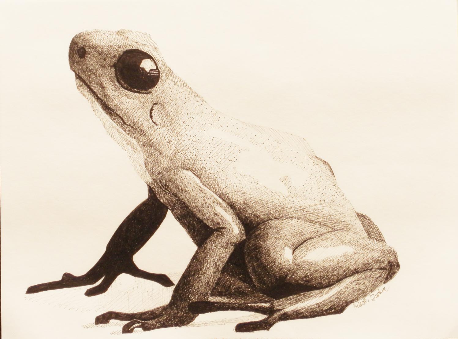 poisondart frog