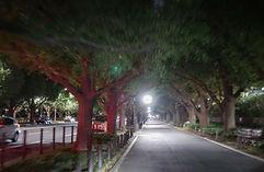 popular trees.jpg