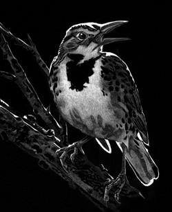 Meadowlark (SOLD)