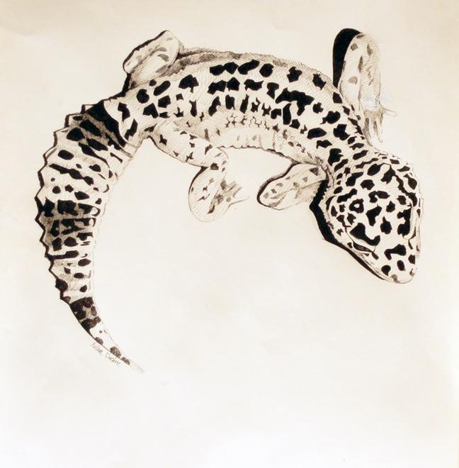 leopard geco