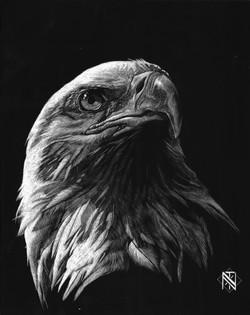 Bald Eagle (SOLD)