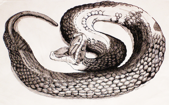 black and white snake