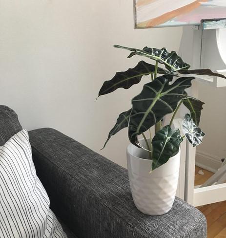 Les plantes intérieures : combattre la déprime saisonnière