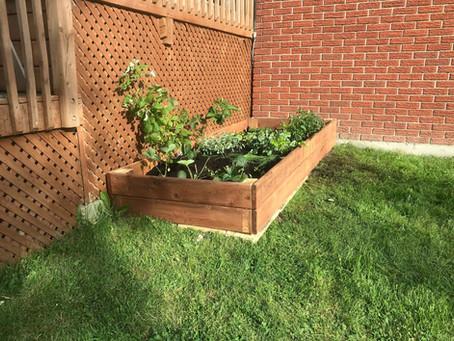 Un beau jardin maison à petit budget!