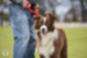 Wondog-8.jpg