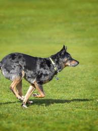 Wondog 8.jpg