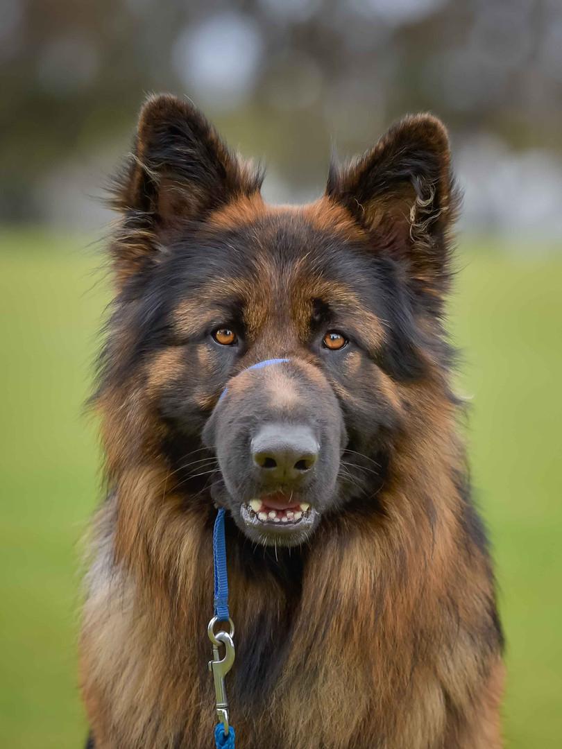 Wondog-17.jpg