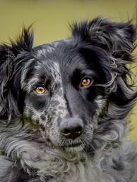 Wondog-1.jpg