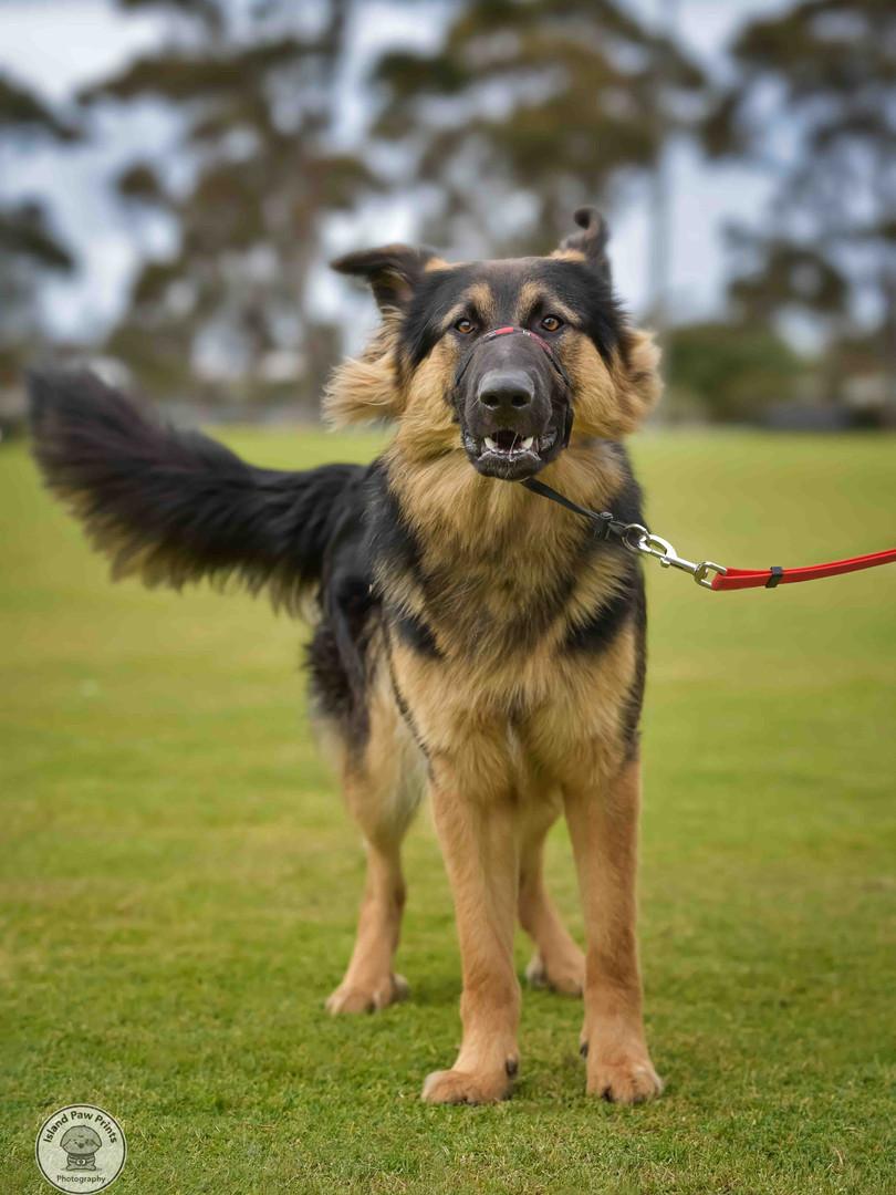 Wondog-6.jpg