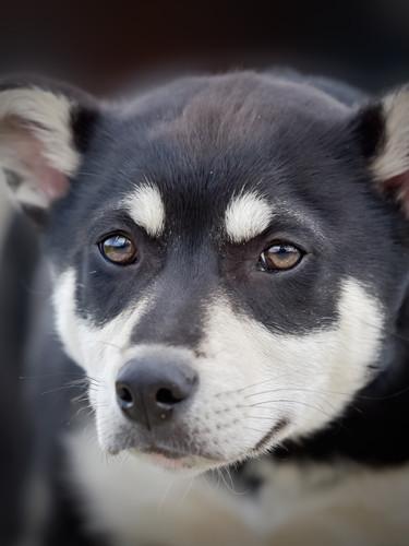 Wondog 25.jpg