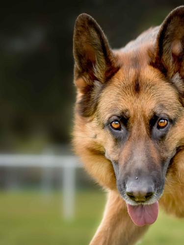 Wondog-16.jpg