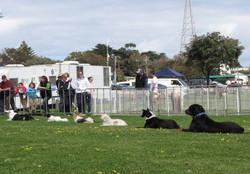 Pet Expo 2009 San Remo Demo Team Dogs L