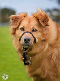 Wondog-2.jpg
