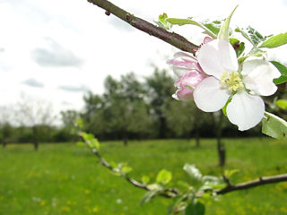 The Gardener's Orchard in blossom