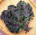 Baltic-Red-Kale-4.jfif