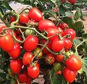 gardeners_sweetheart_3.jfif