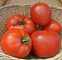 p-9493-tomato_jory1.jfif