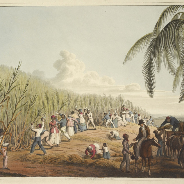Slaves cutting the sugar cane