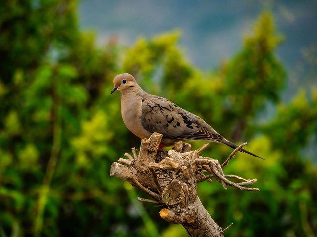 """I need more birds"" -MIA #calvarealism #"