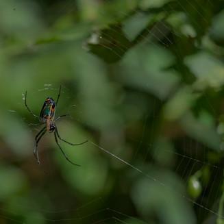 holy spider.jpg