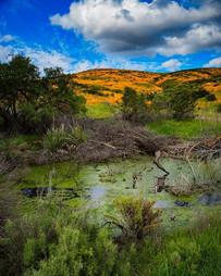 Swamp thing you make my heart sing  #cAL