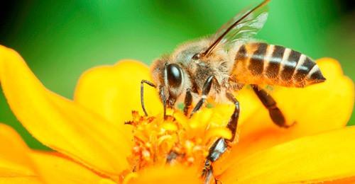 Políticas do Mapa incentivam a produção nacional de mel