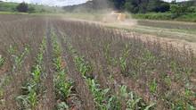 Embrapa: sistema inédito favorece soja e antecipa milho ´safrinha`