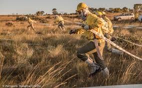 Brigadistas usam fogo para conter incêndios no Pantanal; entenda a técnica