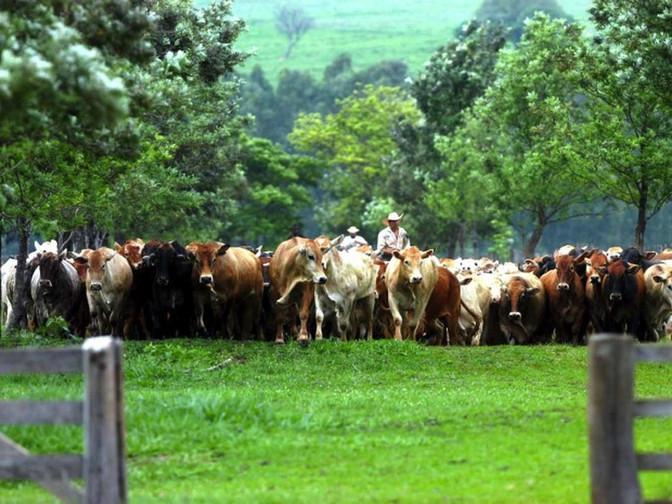 Paraná é reconhecido internacionalmente como área livre da febre aftosa sem vacinação