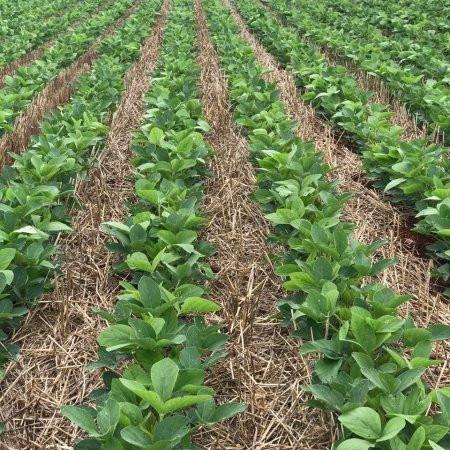USDA: Plantio da soja passa de 40% e fica acima das expectativas do mercado