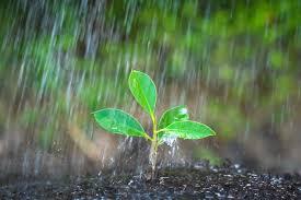 Estação chuvosa começou, mas precipitação ainda é muito irregular e todo Centro-Sul